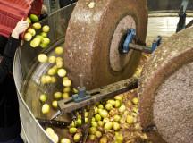 Lemons and Olives Pressed