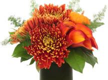 H Bloom