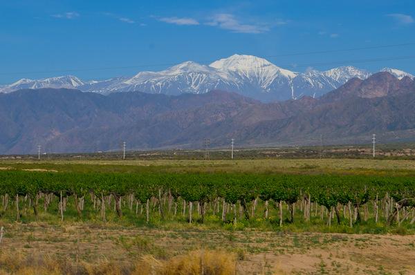 Emily Baillie Photography Argentina Wines
