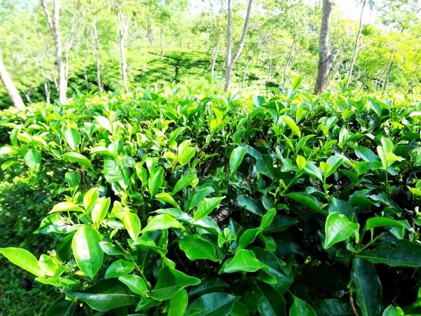 Lalani Tea Company London